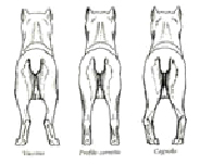 achterste ledematen